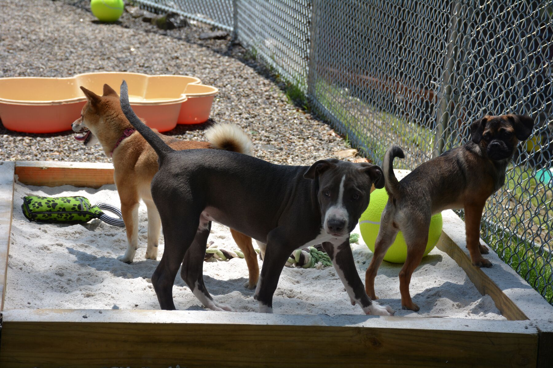 The Woodlands Pet Resort and Spa |